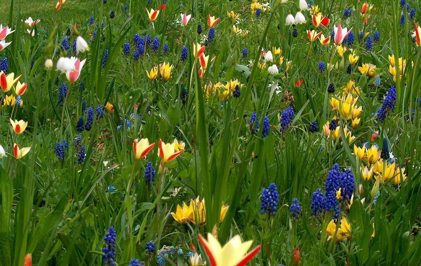 Bloeiende voorjaarsbollen