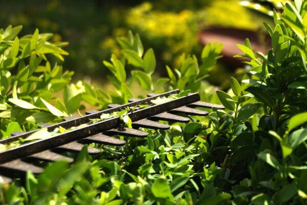 Overhangend groen